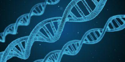 Новая попытка корректировки генома человека
