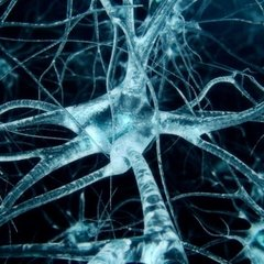 Модель стареющего мозга