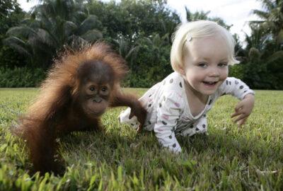 Жесты детей и обезьян