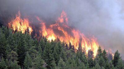 Пожар тайги в сибири