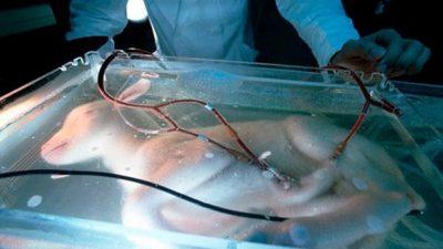 профессору Есинори Кувабара впервые удалость создать искусственную матку и вырастить в ней козленка