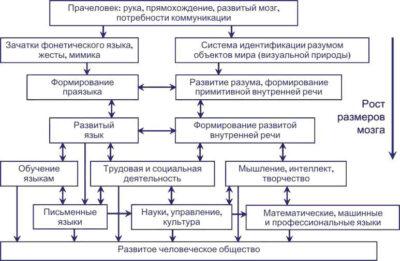 Модель формирования языка и мышления
