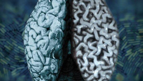 отличие мозга человека от шимпанзе