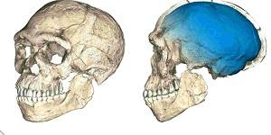 Кости, принадлежавшие древнейшим Homo sapiens